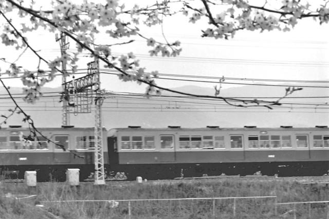 京阪橋本1900系中間と桜.JPG